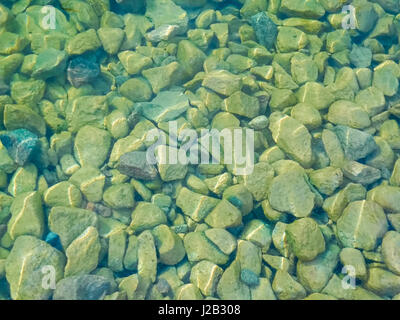 Duckweed in between stones at the waters edge. - Stock Photo