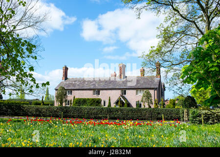 Daffodils and tulips in front  of a traditional farmhouse in Cheshire UK - Stock Photo