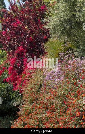 flowers in Palma de Mallorca, Spain - Stock Photo