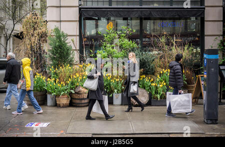 Shoppers walk past a Spring display of tulips and other plants in front of a restaurant in the NoMad neighborhood - Stock Photo
