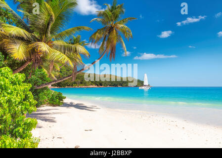 Tropical ocean beach with white sand, coconut palm trees, transparent turquoise water and sailing yacht in bright - Stock Photo