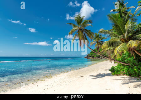 Paradise tropical ocean beach with white sand, transparent turquoise water and coconut palm tree in bright sunny - Stock Photo
