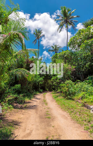 African Jungle road - Stock Photo