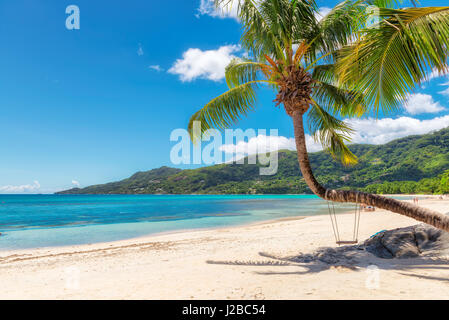 View over the amazing Beau Vallon beach with coconut palm tree on Mahe island, Seychelles. - Stock Photo