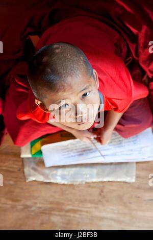 Young monks studying, Chimi Lhakhang Monastery, Pana, Bhutan - Stock Photo