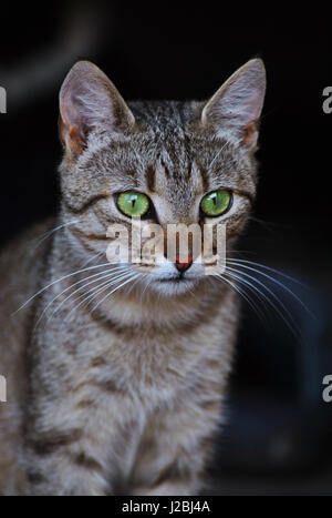 Portrait of cat with big green eyes looking away. - Stock Photo