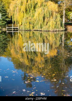 Riverside Tree Reflections, Pangbourne-on Thames, Reading, Berkshire, England, UK, GB. - Stock Photo