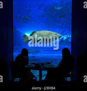 Giant grouper inside the Kuroshio Tank at the Churaumi Aquarium on the main island of Okinawa, Japan. - Stock Photo