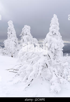 Snowy forest in the National Park Bavarian Forest (Bayerischer Wald) in the deep of winter on the top of Mount Lusen, - Stock Photo