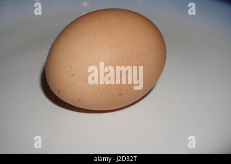 large brown spotted egg closeup on a white background with a s slight dark shadow and nothing else in the picture - Stock Photo