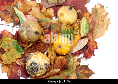 Four small decorative pumpkins on autumn multicolor leafs. View from above. - Stock Photo