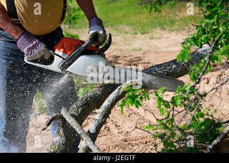 Professional is cutting trees using a chainsaw - Stock Photo