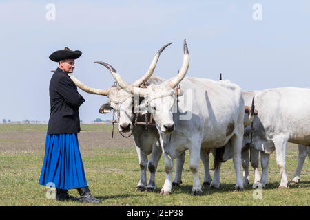 Hungarian Grey Cattle (bos primigenus hungaricus), old and hardy rare cattle breed, Hungary - Stock Photo
