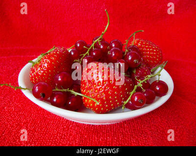 White dish of strawberry and rasberry on red background - Stock Photo