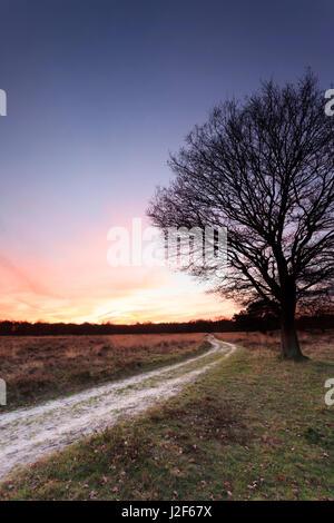 A sandy path at the heathland Molenveld in the Drentsche Aa area. - Stock Photo