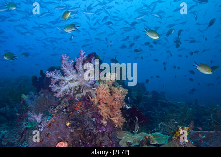 Seascape image of a colorful coral reef, remote and pristine in the heart of the coral triangle. Raja Ampat, Indonesia. - Stock Photo