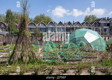 Urban agriculture on a vacant lot on the Oudedijk in Rotterdam - Stock Photo