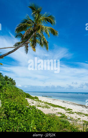 Palm fringed Kolovai beach, Tongatapu, Tonga, South Pacific - Stock Photo