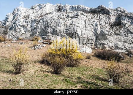 spring Palava mountains in NPR Devin - Kotel - Souteska in South Moravia with meadow, flowering cornus mas plants, - Stock Photo