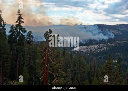 USA, California, Yosemite National Park, Smoke, Big Oak Flat Fire (Large format sizes available) - Stock Photo