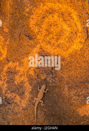 USA, Arizona, Painted Rock Petroglyph Site. Petroglyph and lizard. Credit as: Cathy & Gordon Illg / Jaynes Gallery - Stock Photo