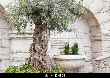 Old greek columns and wall background with stone floor in the garden - Stock Photo