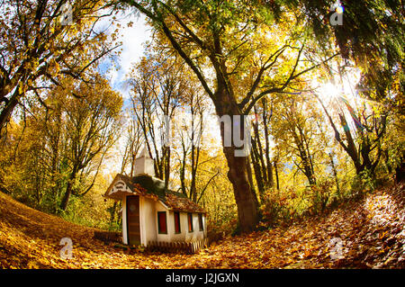 USA, Washington State, Big Leaf Maples and Red Vine Maple Surrounding small Chapel in Autumn - Stock Photo