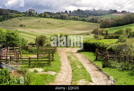 Spring Landscape in the Chiltern Hills in England with Farm track between fields - Stock Photo