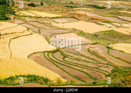 Agriculture land in Punakha, Bhutan. Crops such as rice, wheat and millets are planted in these plot of land. - Stock Photo