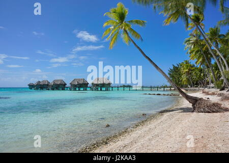 Tropical resort overwater bungalows in the lagoon and seashore with coconut palm trees, Tikehau atoll, Tuamotu, - Stock Photo