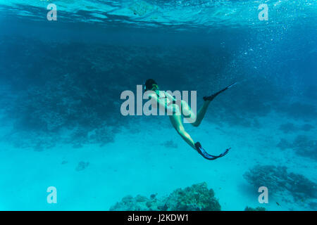 Underwater photo of woman snorkeling and diving in a clear tropical water at coral reef - Stock Photo
