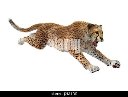 3D rendering of a hunting cheetah isolated on white background - Stock Photo