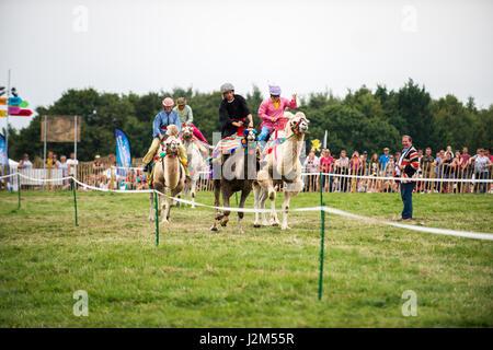 Laverstoke Park Farm, Overton, Basingstoke, Hampshire, United Kingdom. 27 August 2016. Camel Racing at Radio 2 breakfast - Stock Photo