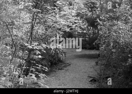 Black and White photos wildlife, plants, trees - Stock Photo
