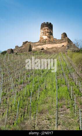 Vineyards and Castle ruins near Bacharach am Rhein in the Mainz-Bingen district in Rhineland-Palatinate, Germany. - Stock Photo