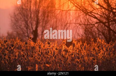 Sunset over the rich marsch grasslands of the upper Lake Zurich, Hurden, Switzerland - Stock Photo