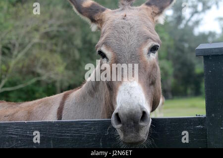 Brown donkey in stable - Stock Photo