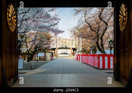 Cherry blossom at Yasukuni Shrine, Tokyo, Japan. a famous Tourist spot in Tokyo, Japan. - Stock Photo