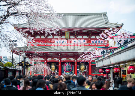 Undefined Tourist in Sensoji shrine. Sensoji temple at Asakusa district in Tokyo, Japan. - Stock Photo