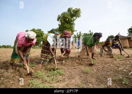 Women and children working a field with hoes, Toeghin village, Oubritenga province, Plateau Central region, Burkina - Stock Photo