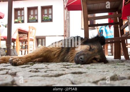 6th May 2012 - Street dog in Turkish city of Eskisehir sleeping beside restaurant tables. - Stock Photo