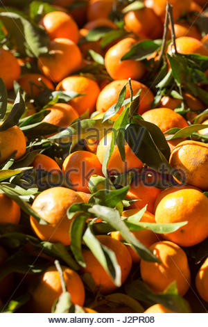 Crate of oranges for sale at the Ifrane souk food market, Middle Atlas region of Morocco - Stock Photo