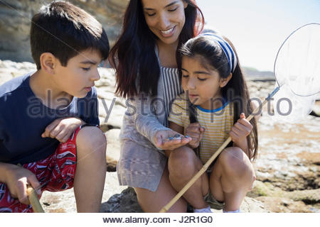 Latino mother and children looking at rocks on sunny beach - Stock Photo