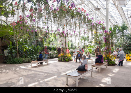 Hanging orchids inside The Glasshouse at The Royal Horticultural Society's garden at Wisley, Wisley, Surrey, England, - Stock Photo