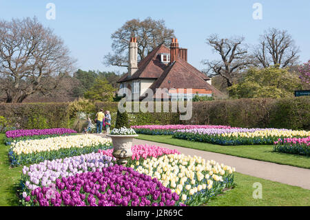 Tuilip gardens at The Royal Horticultural Society's garden at Wisley, Wisley, Surrey, England, United Kingdom - Stock Photo