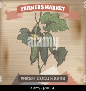 Color fresh cucumbers on a branch hand drawn vector sketch. - Stock Photo
