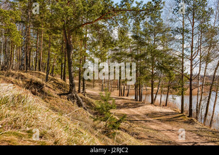 Sunny April day in a pine forest on the shore of the lake. - Stock Photo