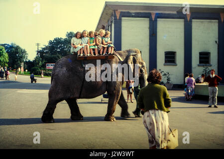 Belle Vue Zoo, Manchester, UK from a vintage image taken in August 1963 showing an elephant ride at the zoo - Stock Photo