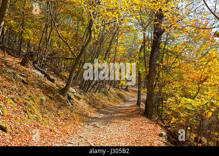 A forest train in autumn. Appalachian trail in West Virginia, USA. - Stock Photo