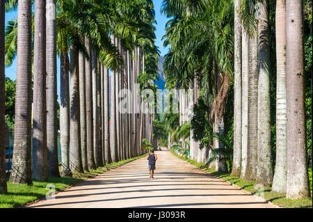 RIO DE JANEIRO - FEBRUARY 21, 2017: Lone jogger runs along the dirt avenue of royal palms in the Jardim Botanico - Stock Photo